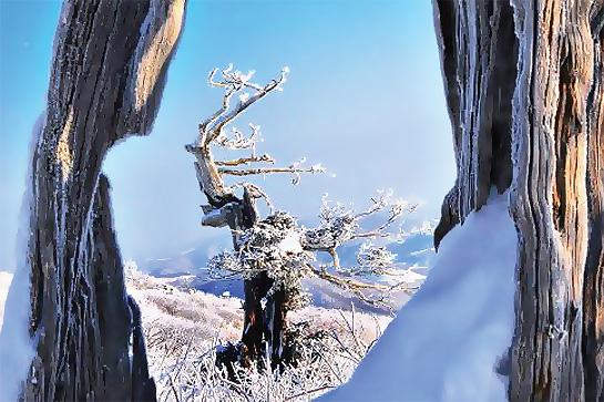 태백산 눈축제