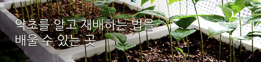 약초를 알고 재배하는 법을 배울 수 있는 곳